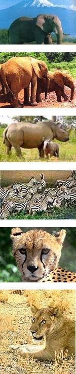 Amboseli Lake Naivasha and Masai Mara Safari