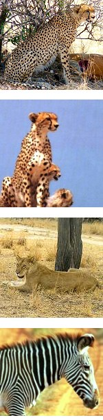 3 Days Adventure Lodge Safari in Samburu Game Reserve
