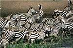 3 Days safari to Amboseli National Park