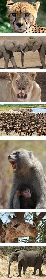 Unforgettable safari to Samburu, Masai Mara and Lake Nakuru