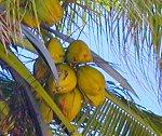 7 Day Beach Holiday in Zanzibar with Local Fishing