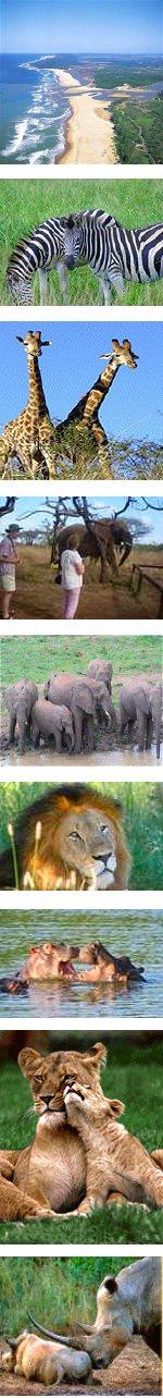 Big 5 Safari and Zululand Cultural Experience