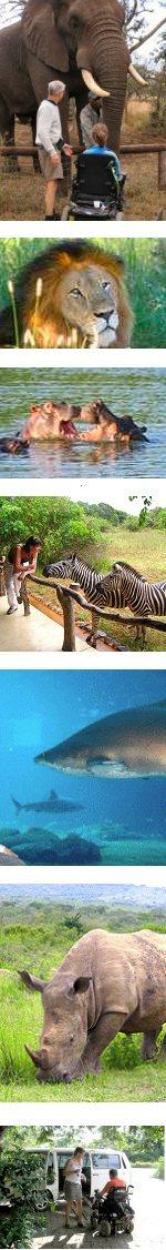 Wheelchair Friendly Big 5 Safari & Adventure