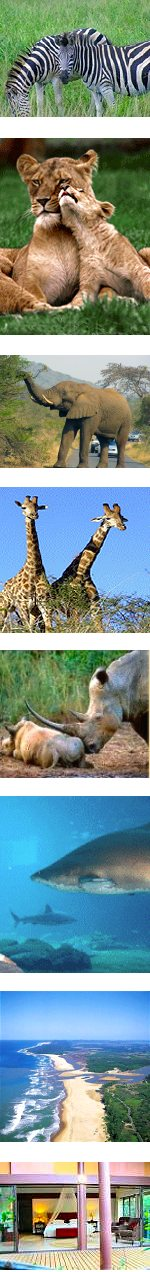 Honeymoon Safari, Cultural Experience and Beach Holiday