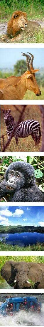 Highlights of Uganda Group Safari