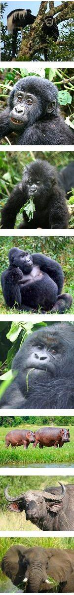 Luxury Primate Group Safari