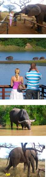 South Africa -  Family Safari and Beaches
