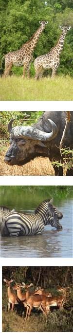 Selous Game Reserve & Mikumi National Park Safari