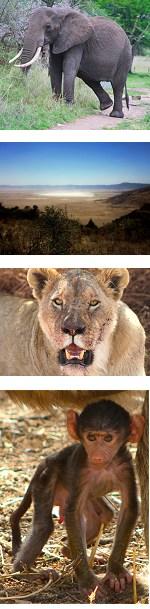 Ngorongoro Crater & Tarangire National Park Safari