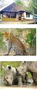 Kruger National Park - Eco-Safari