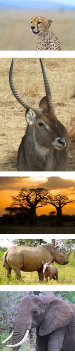 Fantastic Budget Safari to Tanzania's Northern Parks