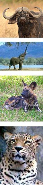 4 days Safari to Selous Game Reserve, Tanzania