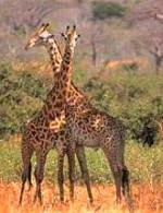 Tanzania 7 days Southern Circuit Safari