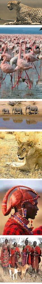 Kenya Fun Safari