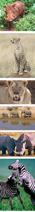 A real Africa safari experience in Kenya