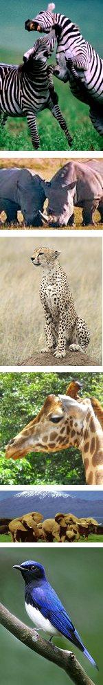 Amboseli and Masai Mara Lodge Safari