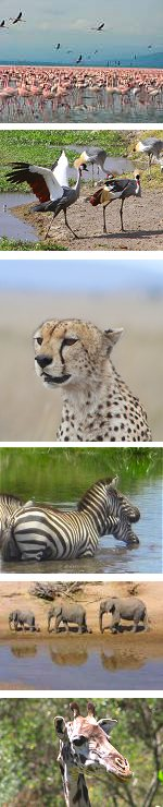 Highlights of Kenya Lodge Safari: 8 days