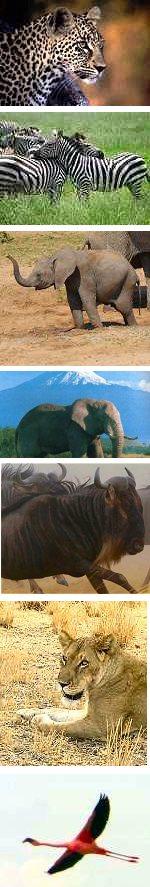 Sweetwaters, Aberdares, Masai Mara & Amboseli