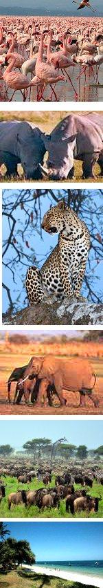 Kenya Wildlife and Beach Combination Safari