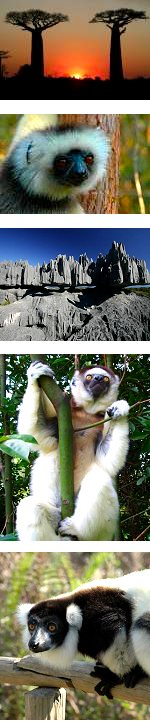Secrets of Madagascar