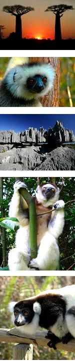 Secrets of Madagascar