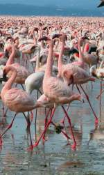 Full Day - Lake Nakuru Safari