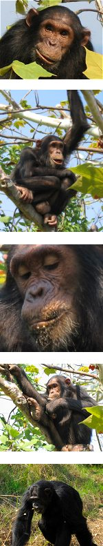 Uganda and Tanzania - Gorilla tracking and Great Serengeti  Migration experience