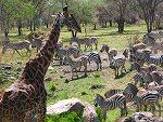 4 day safari to Mikumi National Park Tanzania