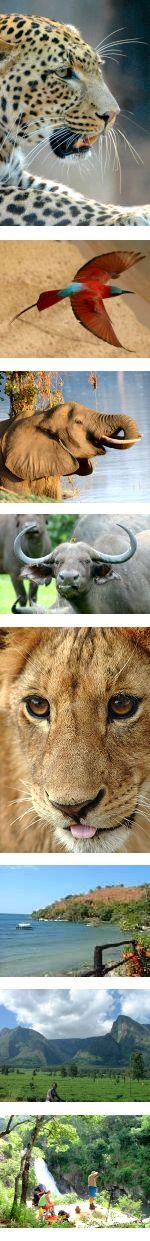 Malawi and Zambia Sheduled Safari
