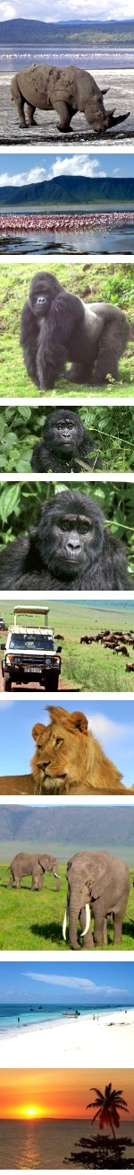 Game Parks & Gorillas