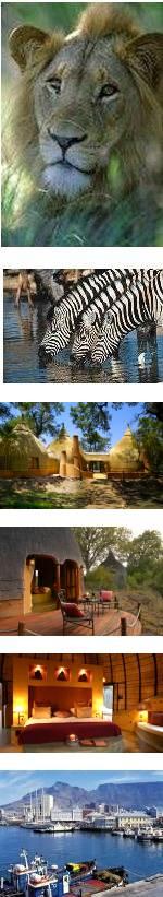 Luxury Kruger Safari & Cape Town