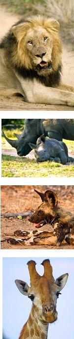 Kruger Park Budget Safari 3-5 Days