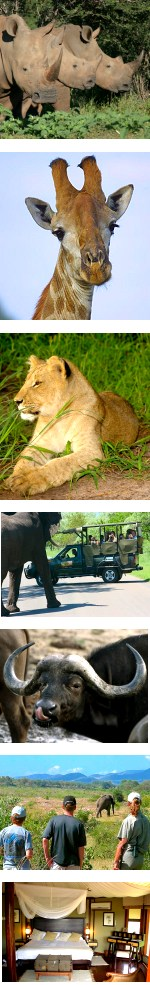 5 Days Kruger Park & Luxury Safari Lodge Combo
