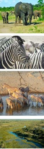 Botswana - Perspectives of the Okavango Delta