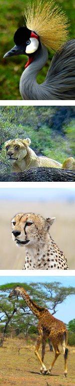 Weekend  Safari Lake Manyara and Ngorongoro Crater