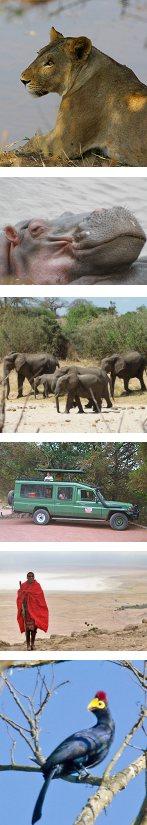 Safari to Lake Manyara, Serengeti and Ngorongoro Crater