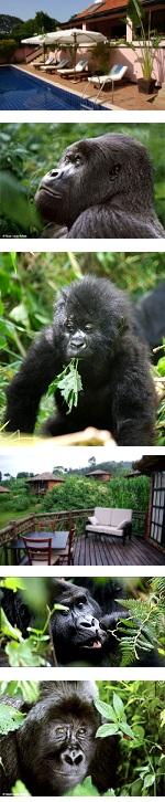 Fly-In Gorilla Safari