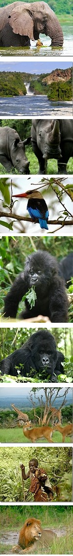 Highlights of Uganda