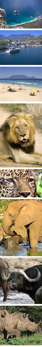 Cape Town & Kruger Big 5 Safari Combo