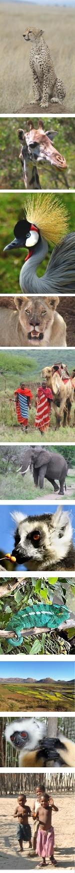 Kenya and Madagascar enticing combination