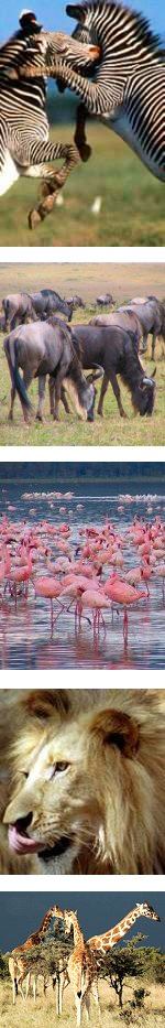 Best of Kenya, Lodge Safari