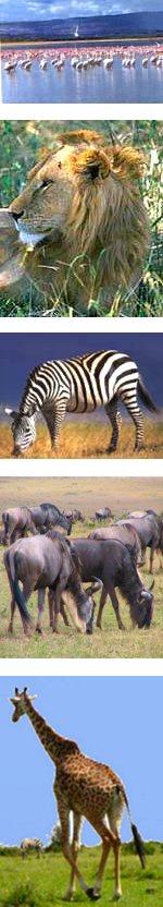 Kenya Safari to Maasai Mara and Lake Nakuru