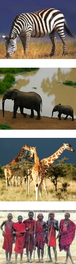 Kenya Maasai Mara Safari 3 days