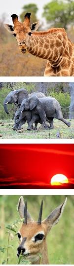 Classic Kruger National Park Safari