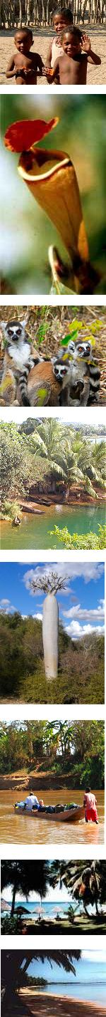Safari on the south west coast of Madagascar (a guided tour)