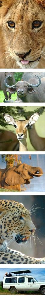 Zambia - Luangwa Valley Budget Lodge Safari