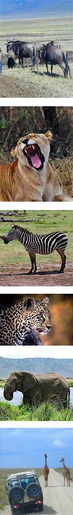 The Great Serengeti Migration Safari in Tanzania