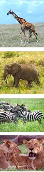 Great Tour - 5 days, 4 nights Safari in Tanzania