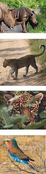 Hluhluwe Imfolozi Game Reserve Safari