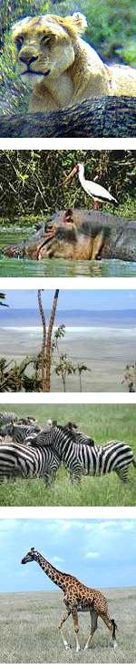 6 day Fun Safari in Tanzania's Northern Parks